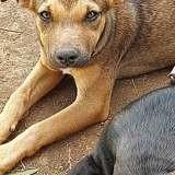 Djune, Chiot à adopter