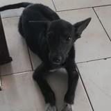 Leya, Chiot à adopter