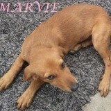 Marvie, Chiot à adopter