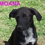 Moana, Chiot à adopter