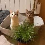Leila et sarah, Chat européen à adopter