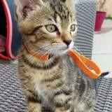 Samy, Chaton à adopter