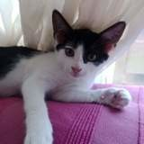 Sunny, Chaton à adopter