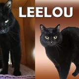 Leelou très caline, Chat à adopter