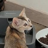 Bailey, Chaton à adopter