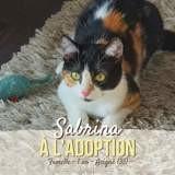 Sabrina, Chat à adopter