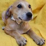 Koda, Chiot à adopter