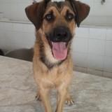 Bandito, Chiot à adopter