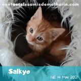 Salkyo, Chaton à adopter