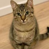 Rosi, Chat à adopter
