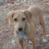 Lucio, Chiot à adopter