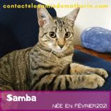 Samba, Chaton à adopter