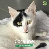 Coraline, Chat à adopter