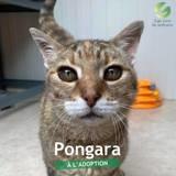Pongara, Chat à adopter