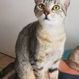 Sidney, Chaton à adopter