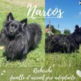 Narcos, Chien spitz allemand à adopter