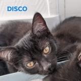 Disco, Chaton à adopter