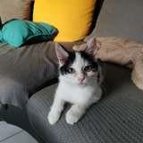 Sookie, Chaton à adopter