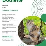Boulette, Chat à adopter