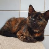 Suki, Chaton à adopter