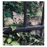Minet, Chat à adopter