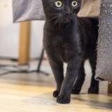 Seppi, Chaton à adopter