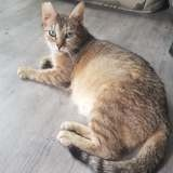 Indy, Chat à adopter
