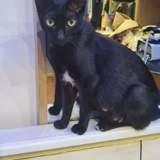 Shena, Chat à adopter