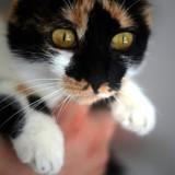 Ariel, Chat à adopter