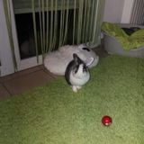 Rexy, Animal à adopter
