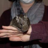 Chili, Animal à adopter
