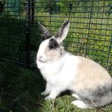 Murphy, Animal à adopter