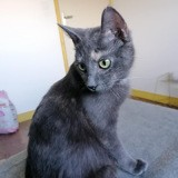 Chamallow, Chat à adopter