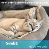 Simba, Chaton à adopter