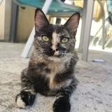 Sofia, Animal à adopter