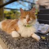 Milord, Chat à adopter