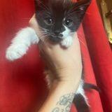 Ruby, Chaton à adopter