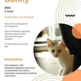 Sonny, Chaton à adopter