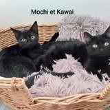 Mochi et kawai, Chaton à adopter