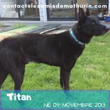 Titan, Chien à adopter
