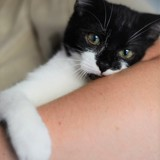Donuts, Chaton à adopter