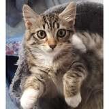 Mia, Chaton à adopter