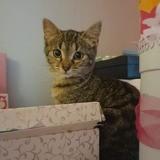 Luna, Chaton à adopter