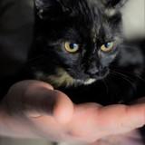 Gaya, Chaton à adopter