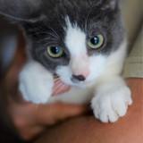 Lou, Chaton à adopter