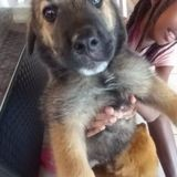 Zyco, Chiot à adopter