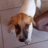 Flo, Chiot à adopter
