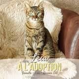 Leia, Chat européen à adopter