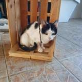 Roxie, Chat à adopter
