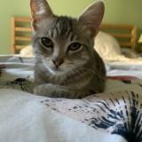 Saphir, Chaton à adopter